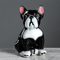 Копилка 'Французский бульдог', глянец, чёрный цвет, 19 см