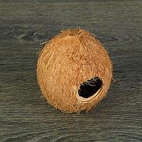 Скорлупа кокосовая целая для рептилий и грызунов, L