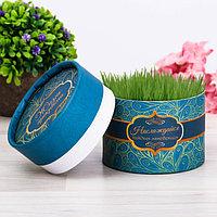 Растущая трава в тубусе 'Наслаждайся каждым мгновением'