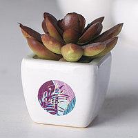 Суккулент в керамическом горшочке Be happy, 7.5 x 5.5 x 6 см