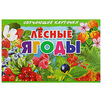 Обучающие карточки 'Лесные ягоды' (европодвес)