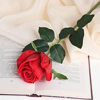 Цветы искусственные LIVE 'Роза нежная' 6х50 см, красный