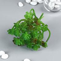 Искусственный суккулент для создания флорариума 'Оскулярия зелёная' 12,5х12х10 см (комплект из 6 шт.)