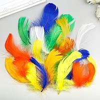 Перья декоративные 'Карнавальные', 5-8 см (набор 24 шт) 6 цветов, яркие, ассорти