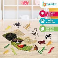 Набор животных с обучающими карточками 'В мире насекомых', животные пластик, карточки, по методике Монтессори