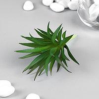 Искусственный суккулент для создания флорариума 'Гастерия трехгранная' 7 см (комплект из 6 шт.)