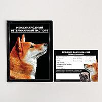 Обложка для ветеринарного паспорта собаки 'Международный ветеринарный паспорт' и памятка