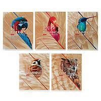 Тетрадь 80 листов клетка Birds, обложка мелованный картон, выборочный лак, МИКС (комплект из 2 шт.)