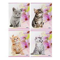 Брошюра для записей А5, 48 листов в клетку 'Котята-5', обложка мелованный картон, блок 2, белизна 75, МИКС