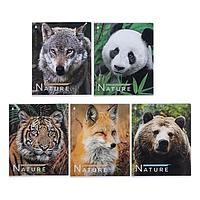 Тетрадь 48 листов в клетку 'Фото зверей', обложка мелованный картон, блок офсет, МИКС (комплект из 3 шт.)