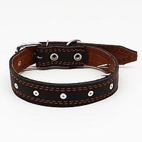 Ошейник кожаный 'Строгий шип', 65 х 3 см, ОШ 40-55 см, чёрный