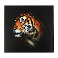 Картина 'Красивейший тигр' 50*50 см