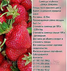 """Рассада клубники """"Zenga Zengana"""" Сербия"""
