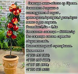 Саженцы мини фруктовые деревья яблони на супер карликовом подвое Сербия