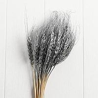 Сухой колос пшеницы, набор 30 шт, цвет серебрянный