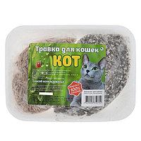 Травка 'Кот' для кошек, на подложке (комплект из 2 шт.)