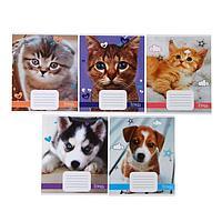Тетрадь 18 листов в линейку 'Домашние животные', обложка мелованный картон, ВД-лак, блок офсет, МИКС (5 видов