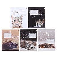 Тетрадь 12 листов в клетку 'Удивительные котята', обложка мелованная бумага, ВД-лак, МИКС (комплект из 10 шт.)