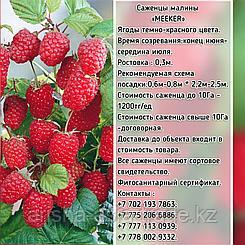 "Саженцы малины ""Meeker"" (Микер) Сербия"