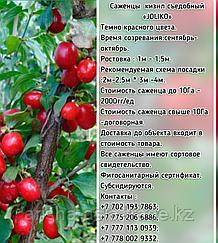 "Саженцы кизил съедобный ""Joliko"" (Джолико) Сербия"