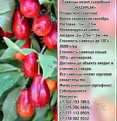 """Саженцы кизил """"Kazanlak"""" (Казанлак) Сербия"""