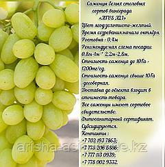 """Саженец винограда белый столовый """"Afus Ali"""" (Афус Али) Сербия"""