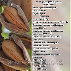 """Саженцы миндаля """"Marcona"""" (Маркона)  подвой джанарика Сербия"""