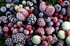 Комплект оборудования для производства быстрозамороженных фруктов и овощей ИПКС-0606, произв. 600 кг/сутки