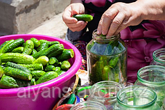 Комплект оборудования для фасовки и упаковки соленых и маринованных овощей ИПКС-0614