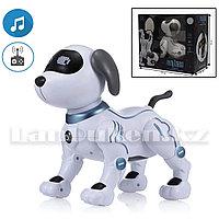 Игрушка Робот собака на батарейках танцующая музыкальная на радиоуправлении Пультовод A2875