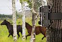 Защищенная видео-фотоловушка/охотничья камера 24Мп с супер ночным виденьем и WiFi (новинка 2021года!), фото 8
