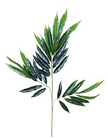 Бамбук (зеленый), 65см.