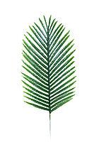 Феникс зеленый