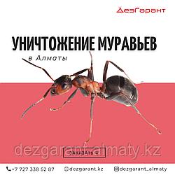 Уничтожение муравьев Алматы