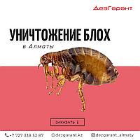 Уничтожение блох Алматы
