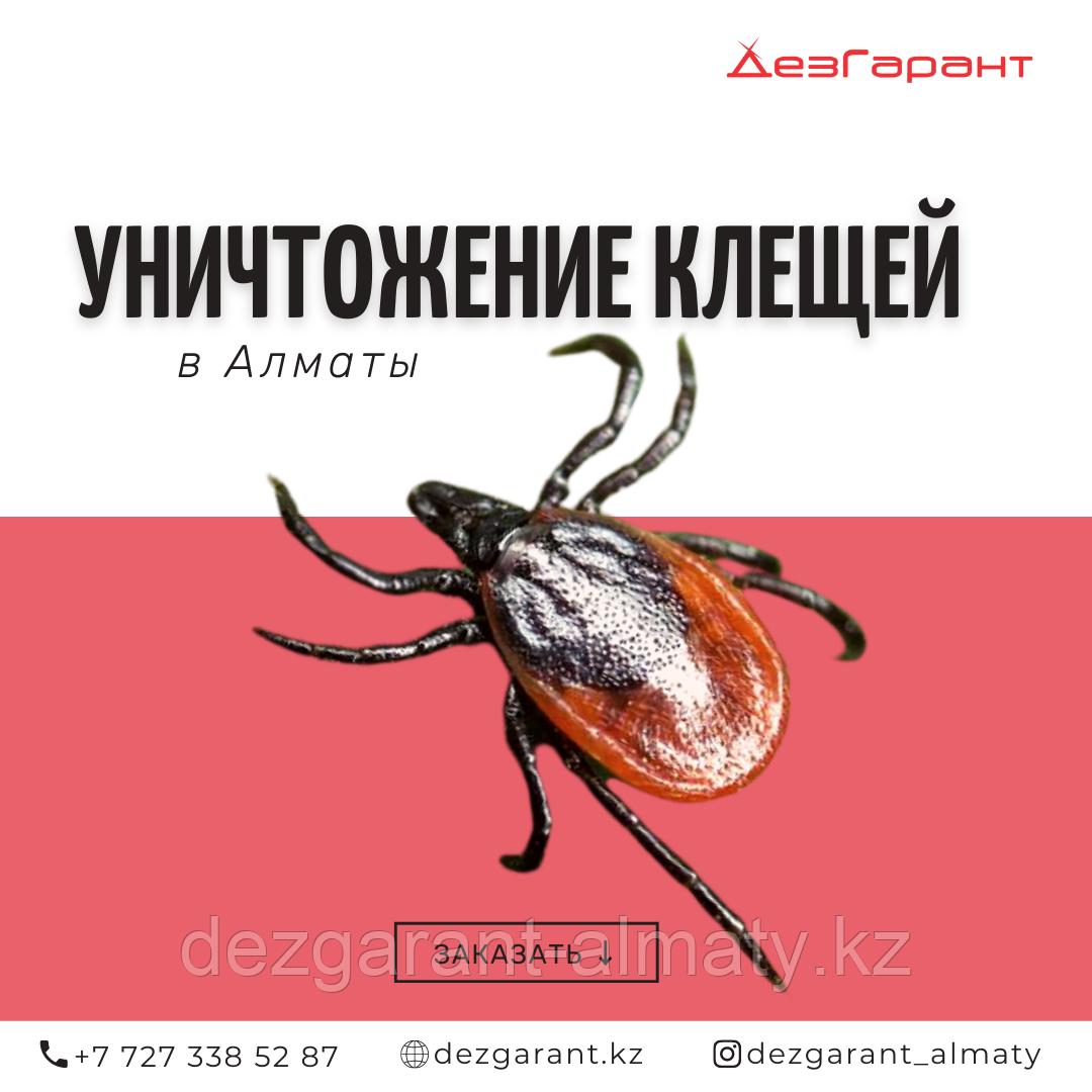 Обработка участка (территории) от клещей в Алматы