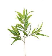 Пендула (зеленая), 80см.