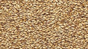 Солод ячменный специальный российский, Пшеничный, Курский солод. 1 кг