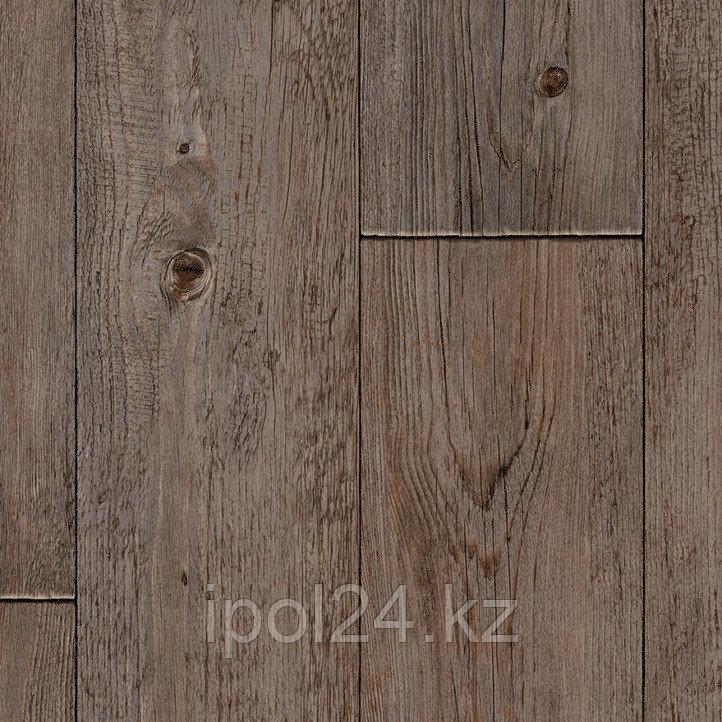 Foxtail Pine W96
