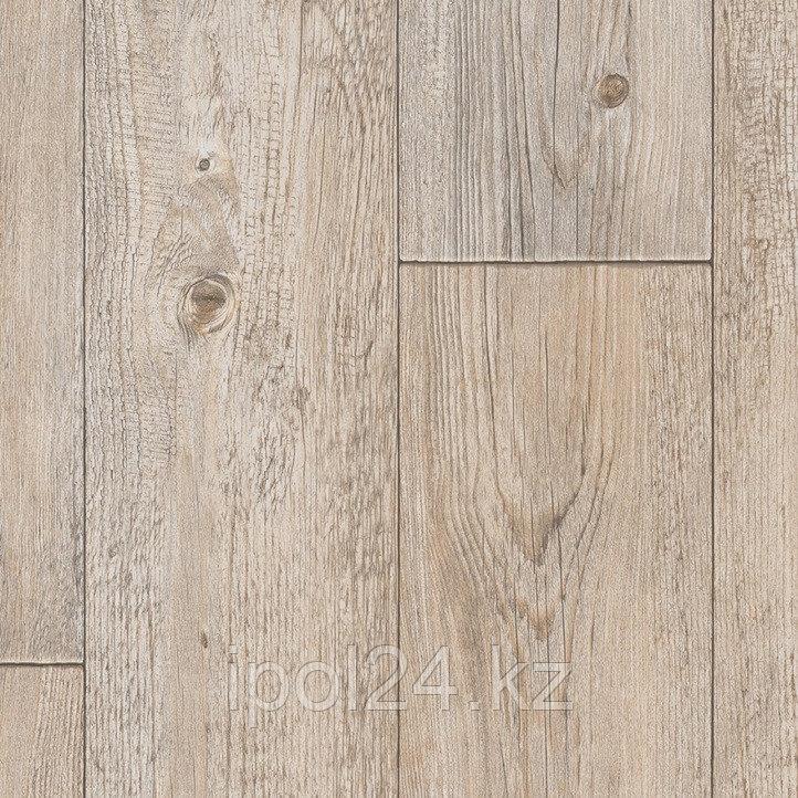 Foxtail Pine W92