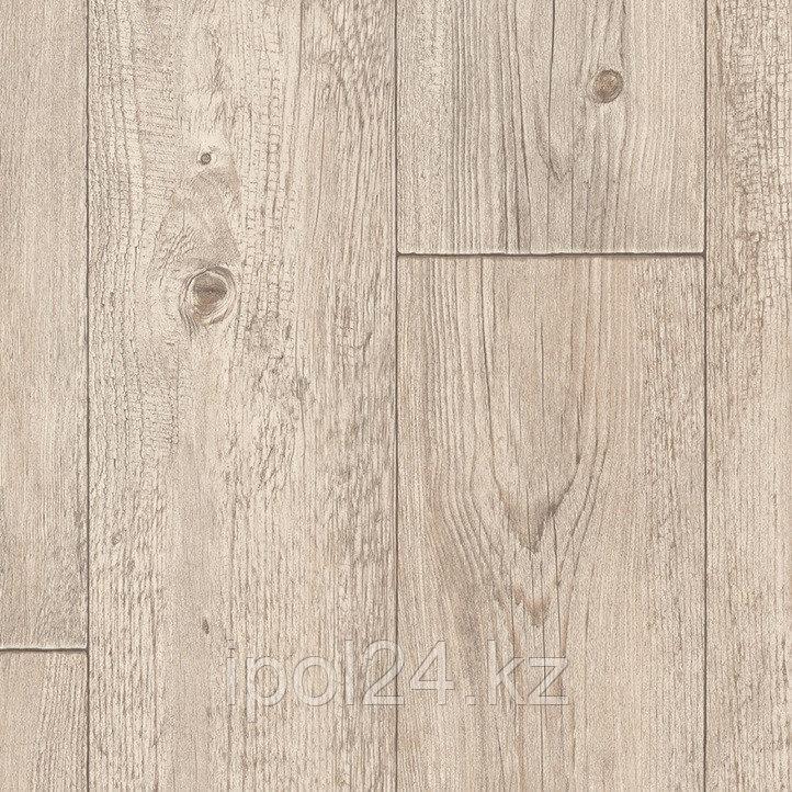 Foxtail Pine W06