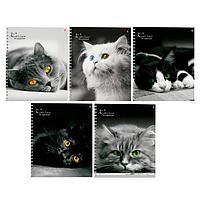Тетрадь А5+, 80 листов в клетку на гребне 'Кошки', обложка мелованный картон, глянцевая ламинация, МИКС