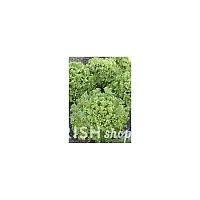 Семена салата Абрек 20гр