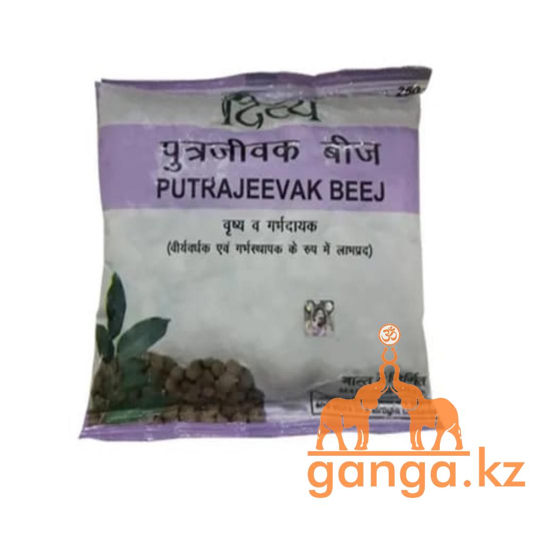 Семена растения Путрадживы (Putrajevaak beej PATANJALI), 250 грамм