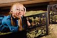 Книга театр теней Золотой ключик, фото 4