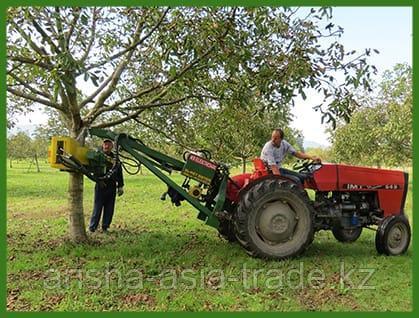 Оборудование по сбору урожая грецкого ореха Европа
