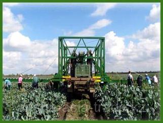 Оборудование по сбору урожая овощей Европа