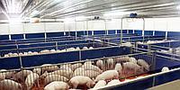 Строительство быстровозводимых свинокомплексов