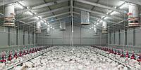 Строительство быстровозводимой птицефабрики под ключ