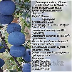 Саженец  сливы Chachanska Lepotica (Чачакская красавица) Сербия